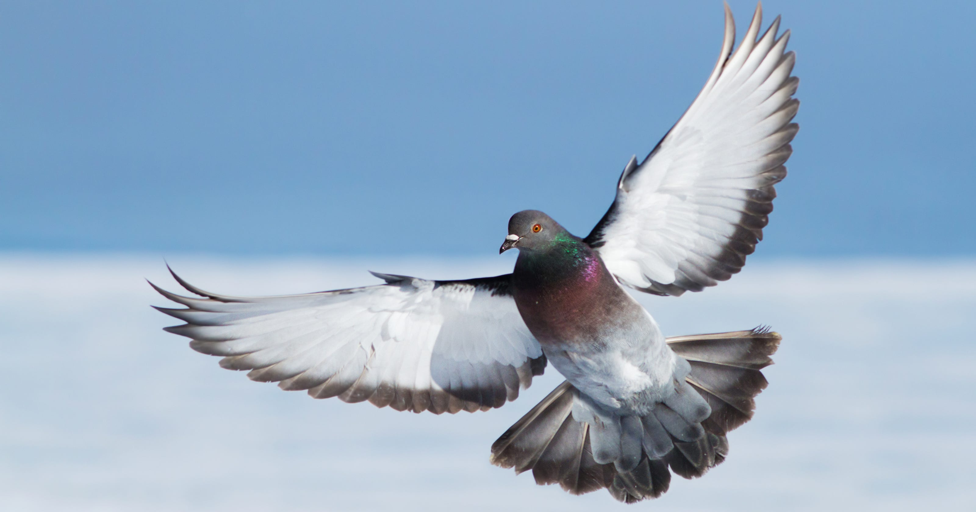 Outdoors Dove Hunting Season In Ny Theres A Chance