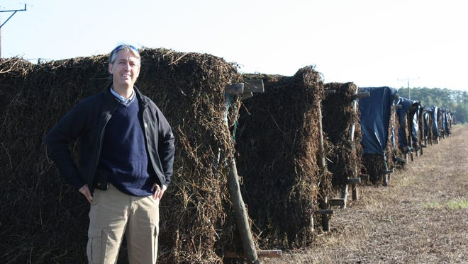 Rich Ahrens stands in a field of drying peppermint in Baboswezo, Poland.