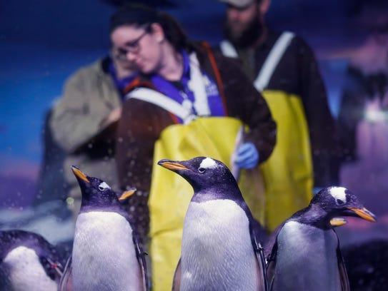 Workers at The Wonders of Wildlife Museum and Aquarium