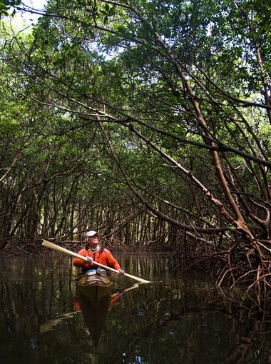"Mike Devlin kayaks through a section of mangroves called ""The Church"" on Wednesday, Aug. 9, 2017, near Wiggins Pass in North Naples. Devlin runs a kayak tour business and gives lessons."