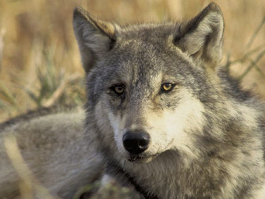 graywolf-Hollingsworth-700x296.jpg