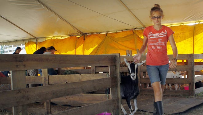 Julia Sapienza takes her goat out for a walk during the Monroe County Fair at Northampton Park last year. The four-day event will return to the park, which straddles the town line between Ogden and Sweden. Plans for more permanent facilities there, including more lodges, are on hold.  KRIS J. MURANTE/ File photo Julia Sapienza, 14, of Hilton walks her goat at the fair Thursday.  KRIS J. MURANTE/ STAFF PHOTOGRAPHER Julia Sapienza, 14, of Hilton, takes her goat out for a walk during the Monroe County Fair at Northhampton park in Ogden Thursday evening, August 1, 2013.