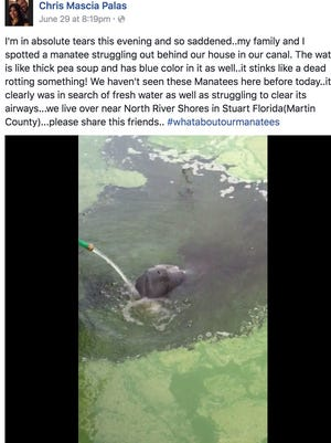 Stuart, Fla., resident Chris Mascia Palas, who lives near North River Shores, posted video of a manatee 'struggling' in a canal behind his home.