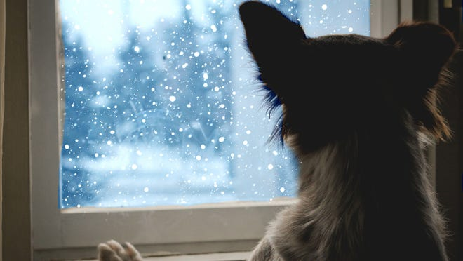 10 things under $40 your dog needs this winter