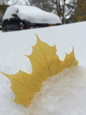 A leaf pops of the snow in Rochester.