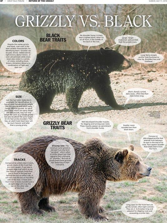 FAL griz page 6 bear compare_v1