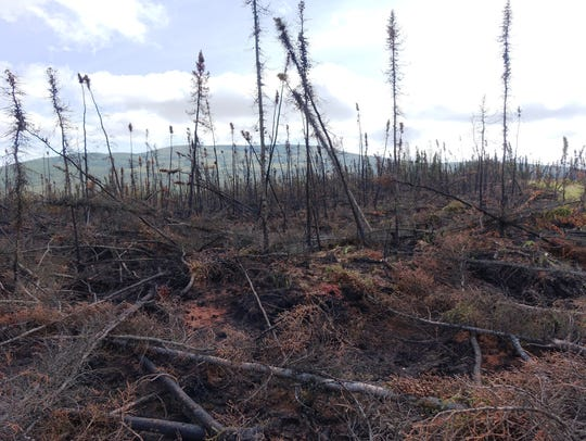 Burned trees and tundra stand out against the wide-open