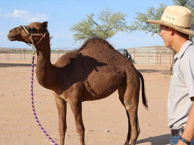 Camel Safari, located in Bunkerville off Interstate