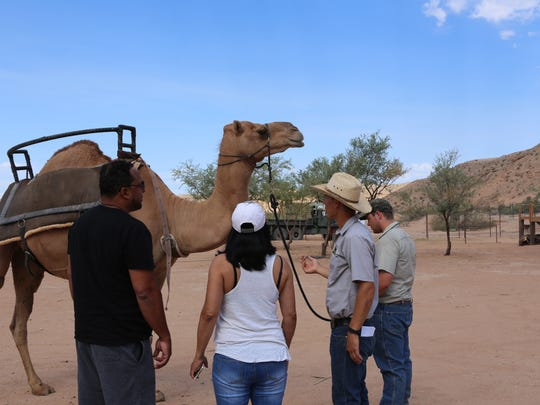 Camel Safari offers its visitors with camel rides, Segway tours and a meet-and-greet with the camels.