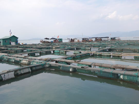 A series of commercial fish ponds in Shandong, China.