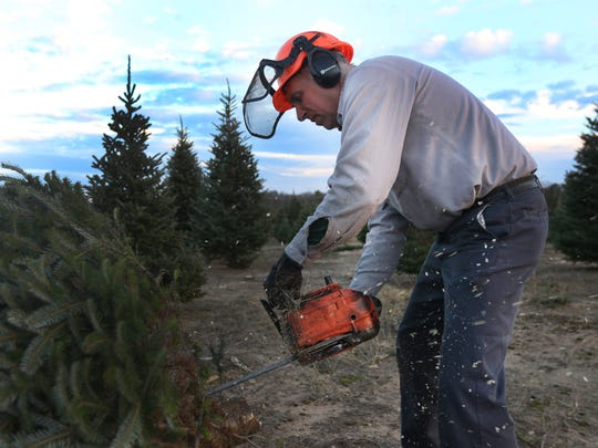 Jan Wolosek cuts down a tree at the Wolosek Christmas Tree Farm south of Wisconsin Rapids, Wednesday, November 16, 2016.