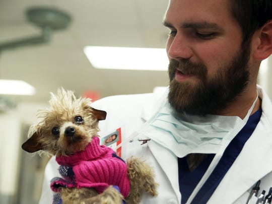 Tyler Davis holds 14-year-old toy poodle Ruby before