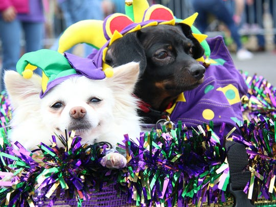 The Krewe of Paws 11th Annual Pet Parade celebrates