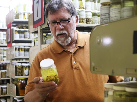 """Dennis Bell, collections manager for the herbarium, reads the label on a jar of fish specimens in storage in Brown Stadium at the University of Louisiana at Monroe on Wednesday, March 29, 2017. The specimens were collected by Neil Douglas, an ichthyologist, and his students starting in the early 1960s. Each specimen jar is labeled with the name of the student who collected it, along with information about the species and where it was found. """"It's the heritage of the university. There are 15,000 biology majors who collected this stuff,"""" Bell said. He estimated that the number of students who contributed to the collection was probably higher than 15,000."""