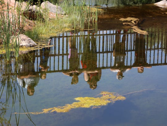 Visitors look into a pond at the Red Hills Desert Garden