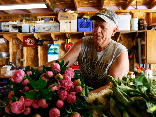 Grower Ed Smola drops off a load of peony stems on Monday, west of Merrill, to help Ovans Peony Farm meet its orders in a season with root rot and blight.