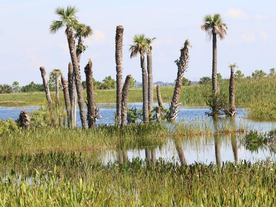 Typical example of the constructed wetlands habitat