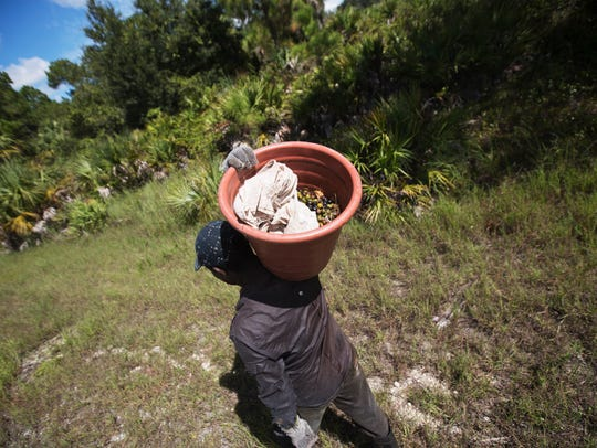 A saw palmetto berry picker who refused to give his