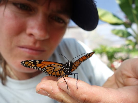 Sara Dykman admires a monarch butterfly, these iconic butterflies connect North America, inspire conservation, teach science education, and are the reason she is biking 10,000 miles.