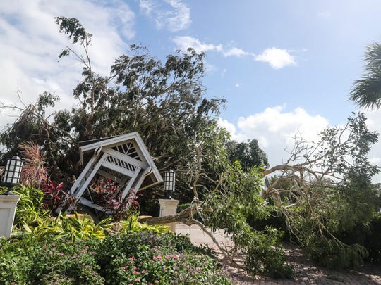A giant tree at the entrance of Case Ybel Resort  blocked