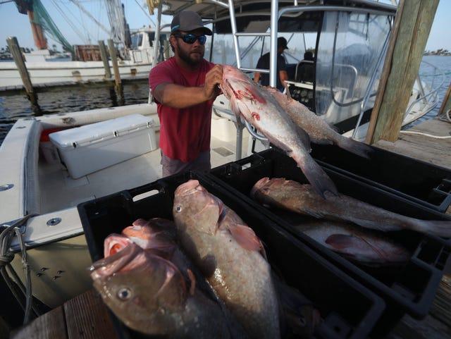 Is Florida seafood safe to eat with red tide and algae blooms?