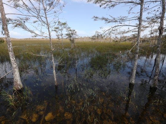 Overturning a decision by the Florida Department of Environmental Protection, an appeals court has ordered the state to issue a permit to a major Broward County landowner whowants to drill an exploratory oil well in the Everglades.