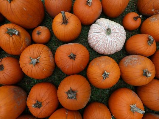 636433405922942297-Pumpkin-3.jpg