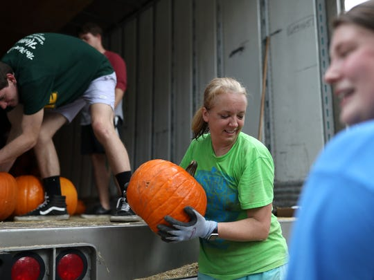Shannon Guse works to move over 2,000 pumpkins from