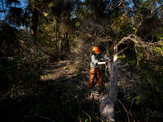 Joe Dodds, an employee of Lee County Parks and Recreation chainsaws a tree downed from Hurricane Irma at Hickey Creek Mitigation Park off of State Road 80. The park along with many others in the region took a hard hit from the hurricane. Most of the park is open.
