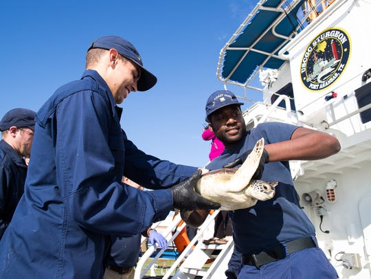 The crew of the USCGC Sturgeon loads 250 cold stunned