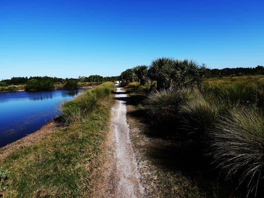 """Parts of the J.N. """"Ding"""" Darling Wildlife Bailey Tract are going to be restored back to a fresh water marsh to accomodate wildlife that subsists in that kind of habitat including the Sanibel rice rat. Ani lake on the left will be filled in to look like the marsh on the right."""