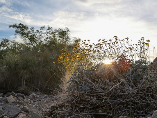 Dozens of species of plants grow at Bonanza Spring in the Mojave Desert.