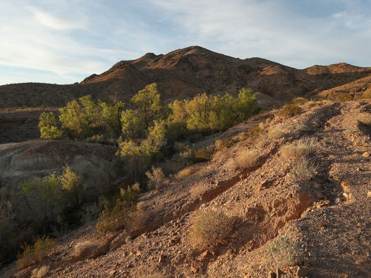 Plants and trees grow along the water flow in Bonanza Spring in the Mojave Desert,