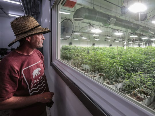Patrick Kelly, a cannabis grand master grower, looks into one of his grow houses in Coachella on Tuesday, April 3, 2018. Kelly is the first grower to operate a stat- licensed cannabis growing facility in Coachella.