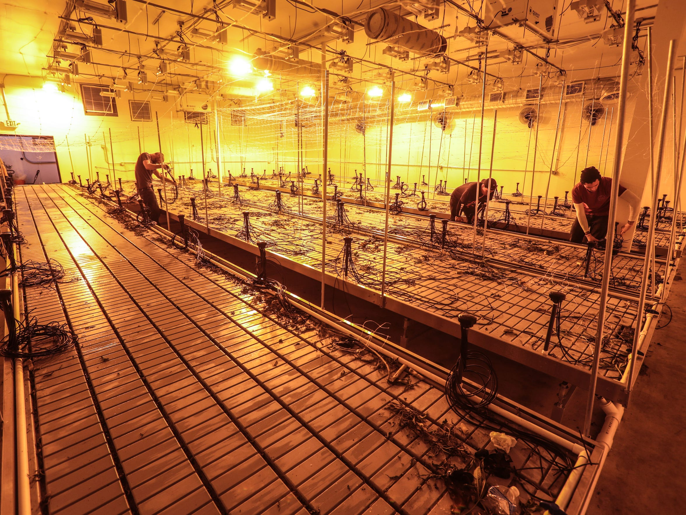 Workers clear out a grow room after a cannabis harvest