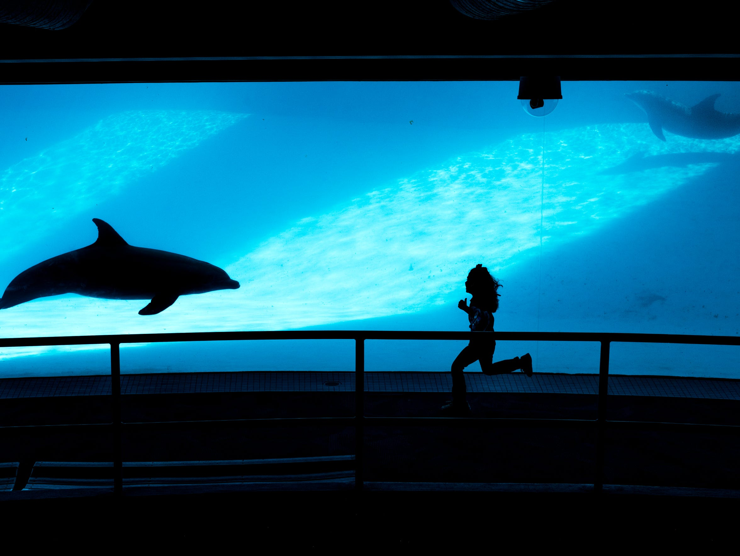 A young girl runs toward the dolphins in a underwater