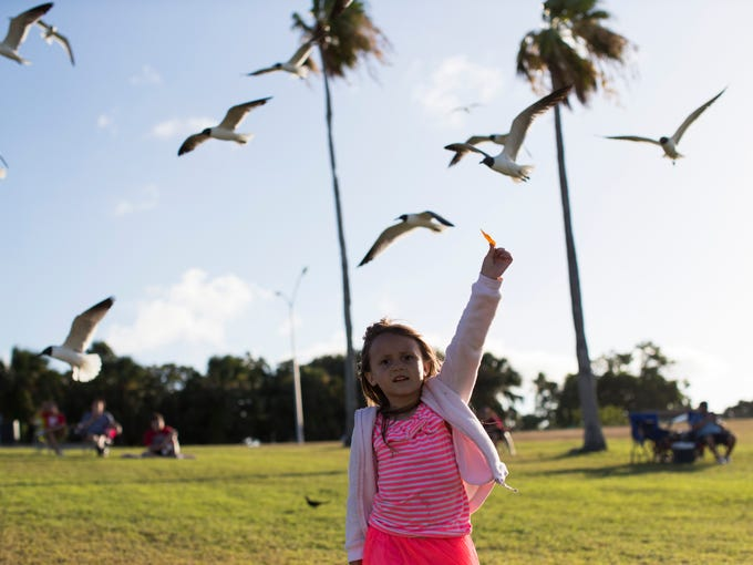 Eliza Hendrickson ,5, feeds the sea gulls before the