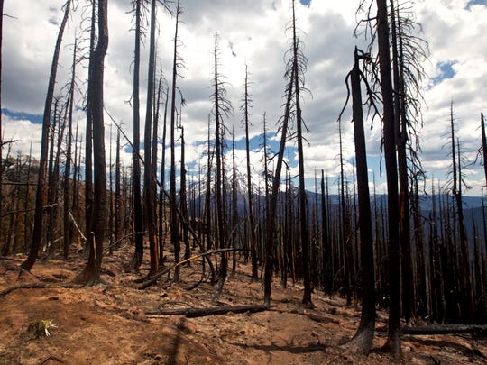 Area on Triangulation Peak burned by the 2017 Whitewater Fire.