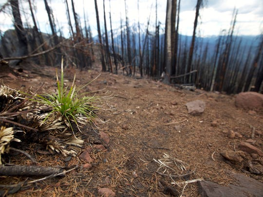 Area on Triangulation Peak burned by the 2017 Whitewater