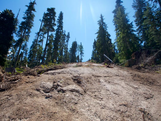 A fire line carved out on Triangulation Peak Trail.