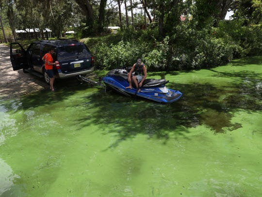 A blue-green algae bloom is seen in this file photo from Florida.