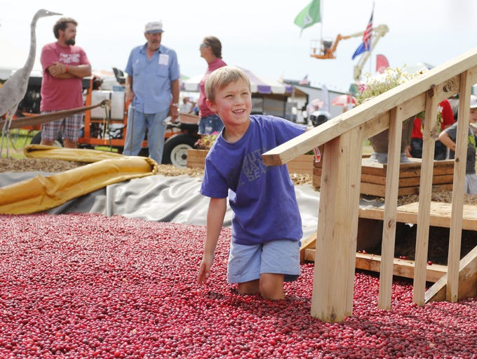 Harrison Clark, 6, of Oshkosh takes a dip in the cranberry