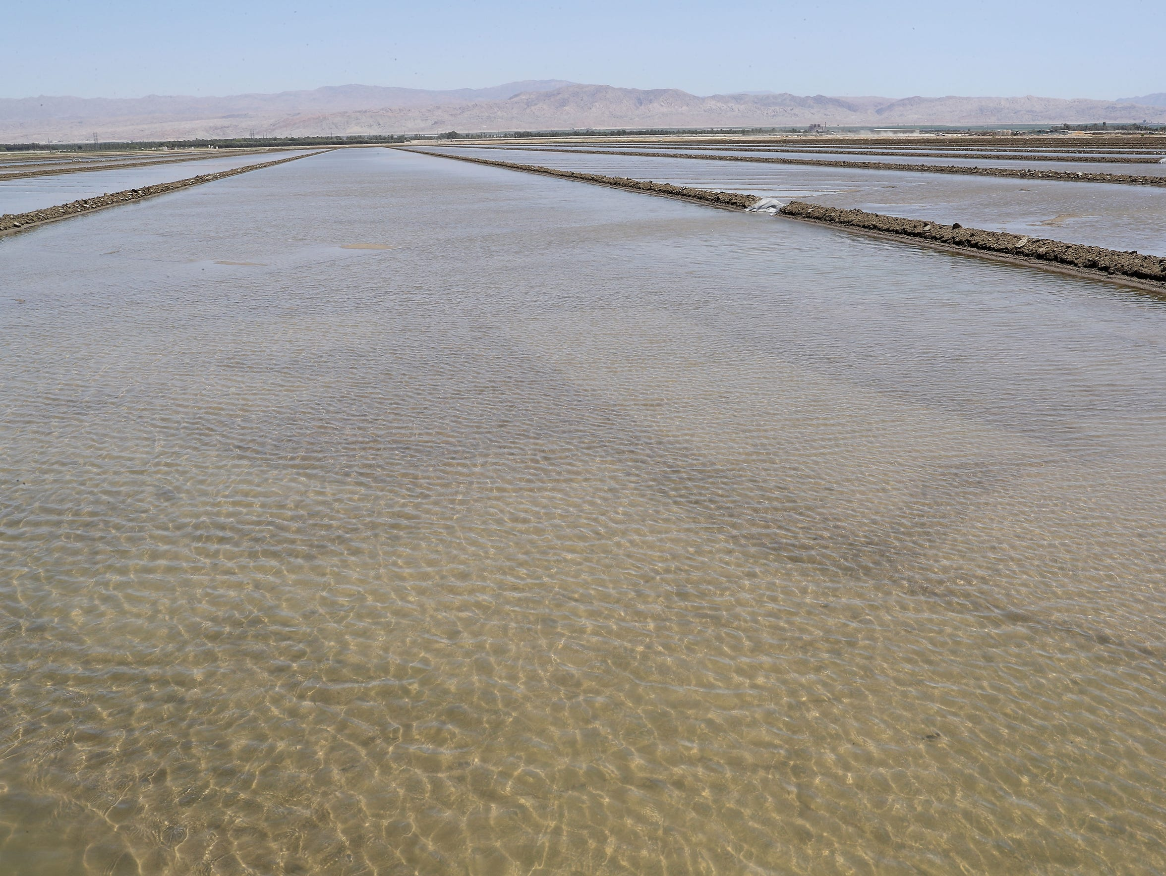 Water covers a field in Thermal on June 13, 2018.