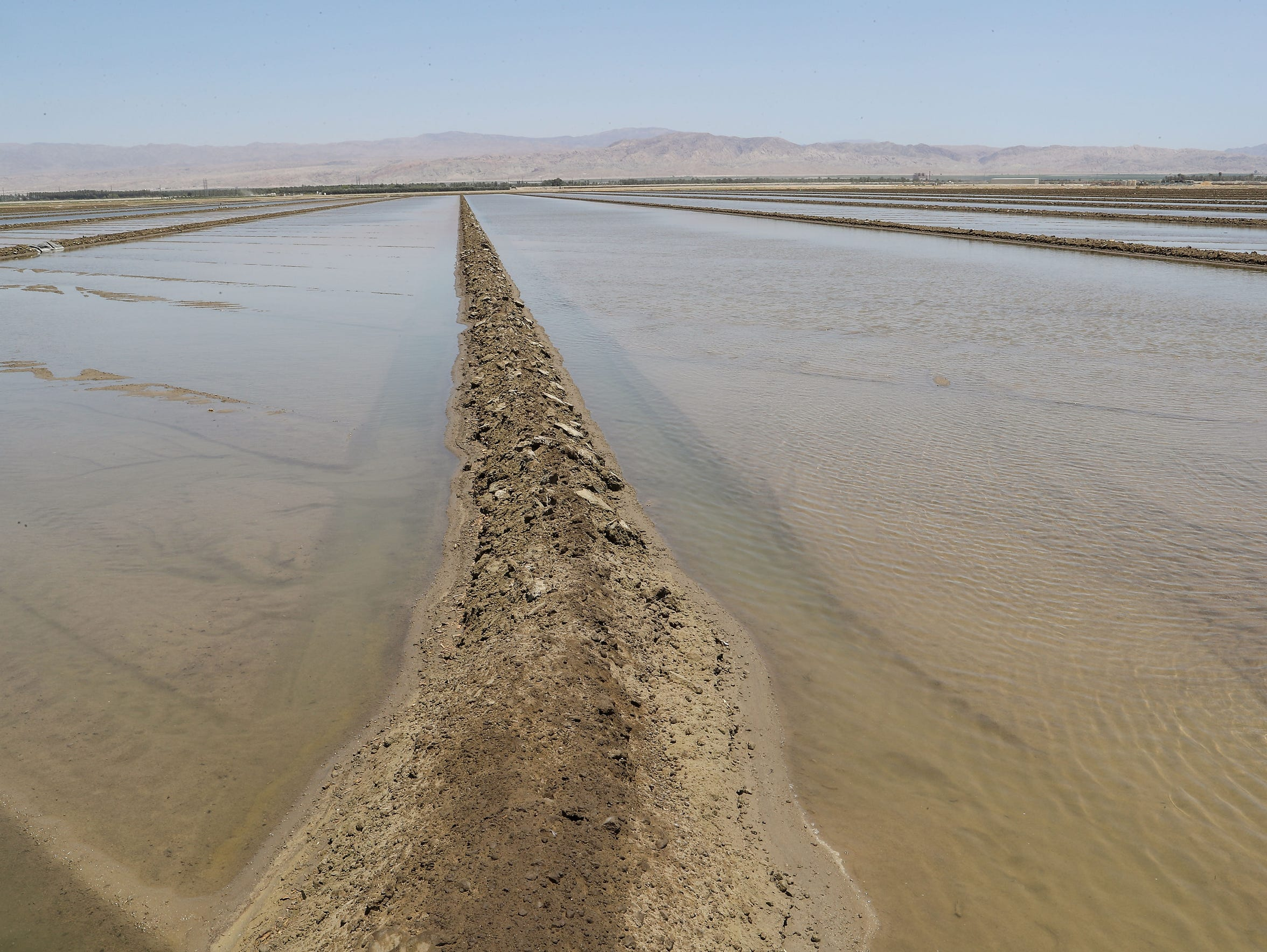 Agriculture accounts for roughly half of all water use in the Coachella Valley.