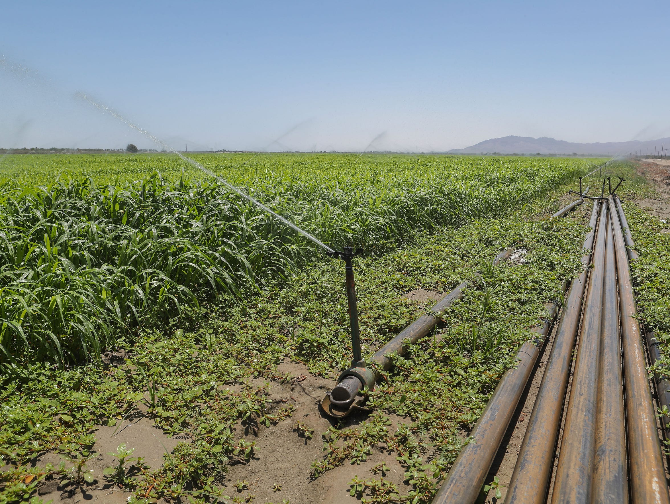 Most of the water that's used to irrigate farms in the Coachella Valley comes from the Colorado River.