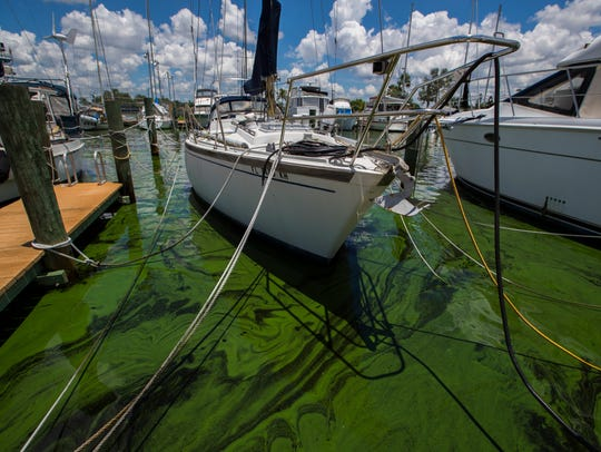 Green algae blooms were visible along the canals of