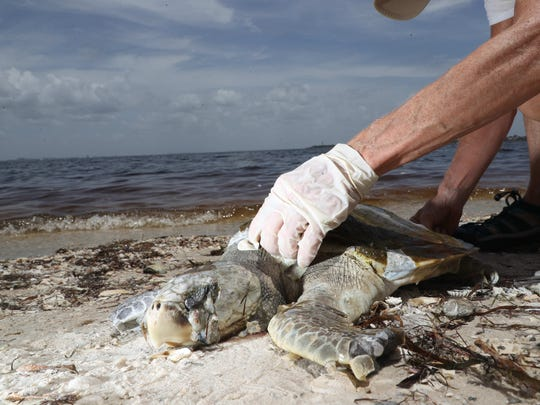 A suspected red tide outbreak is ravaging the marine life in Southwest Florida.