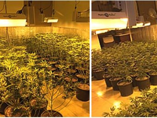 An illegal marijuana grow was discovered at a Rancho