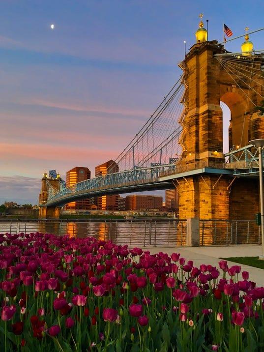 636560291665810704-bridge-tulips.jpg