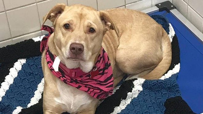 Monica needs a home and is waiting at the Nashville Humane Association.